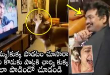 charmy-pet-dog-reaction-to-puris-son-song